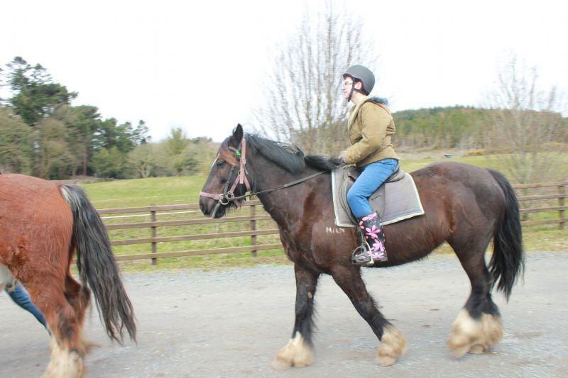horse_riding_(29).JPG